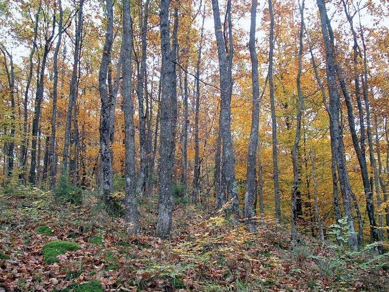 šuma | Hrvatska enciklopedija